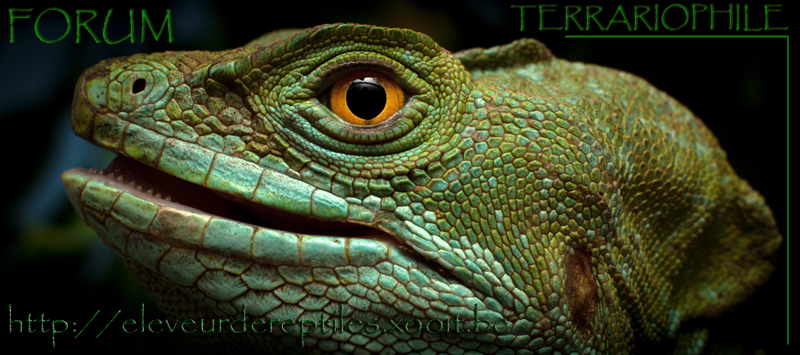 Eleveur de Reptiles Index du Forum