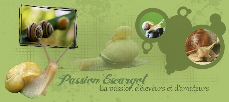 Passion Escargot Forum Index