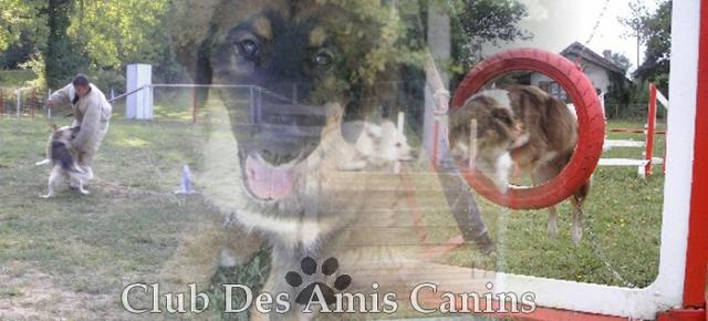 Club des Amis Canins Index du Forum
