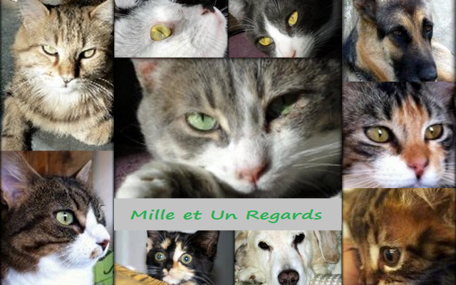 Mille et Un Regards Forum Index