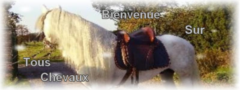 Tous chevaux Index du Forum