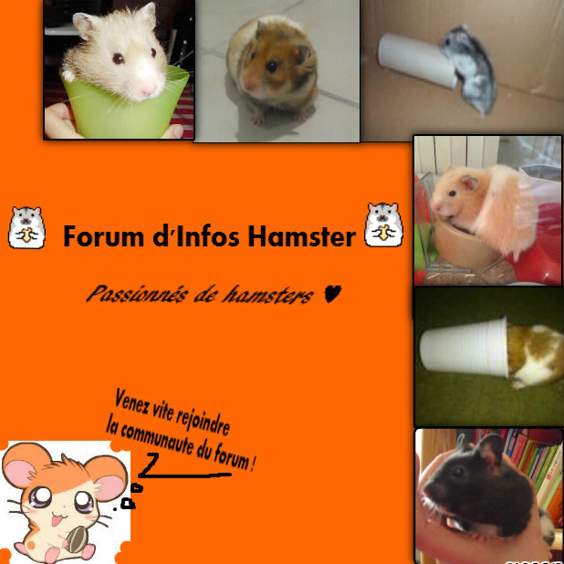 Forum: la passion des hamsters Index du Forum