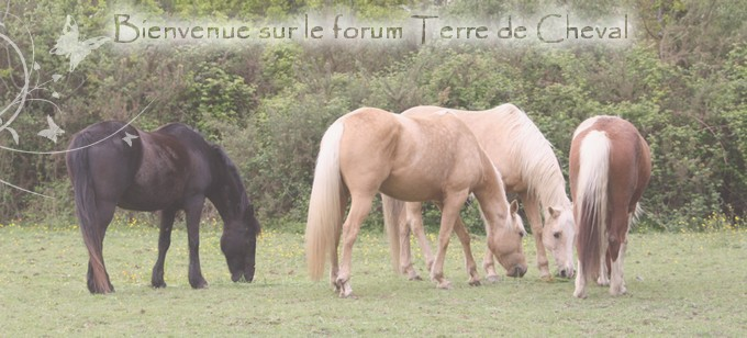Terre de Cheval Index du Forum