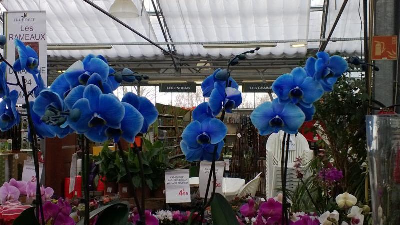 Une Menagerie Dans Mon Jardin Orchidee Bleue