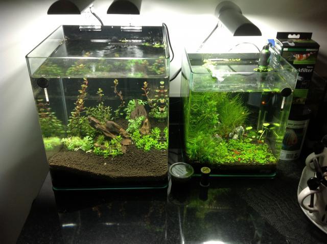 Inscrit le 14 nov 2012 for Poisson aquarium 30l