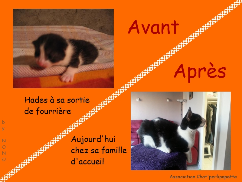 Les avants/après des chats adoptés ou en FA définitive Hades-3bb817b