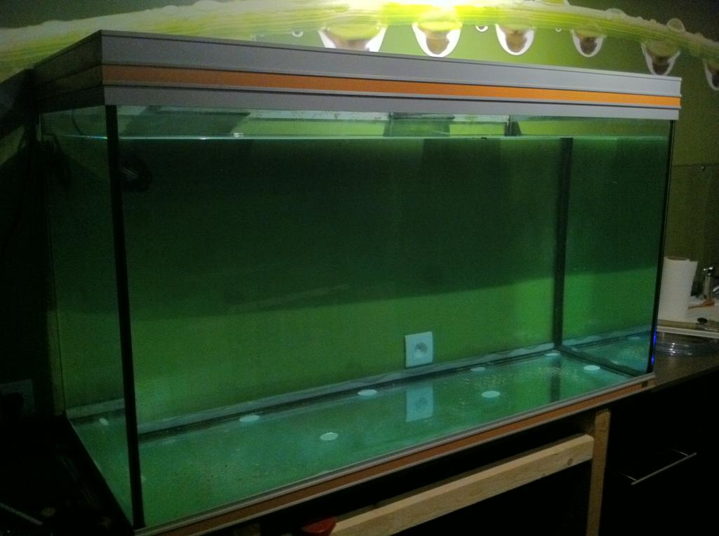 Aquario philrecifal aquarium rena 400 litres for Aquarium rena
