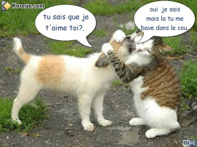 BONJOUR-BONSOIR DU MOIS D'AOUT - Page 6 Humour-de-moi.-tu....-oui-.--3ba2fbf