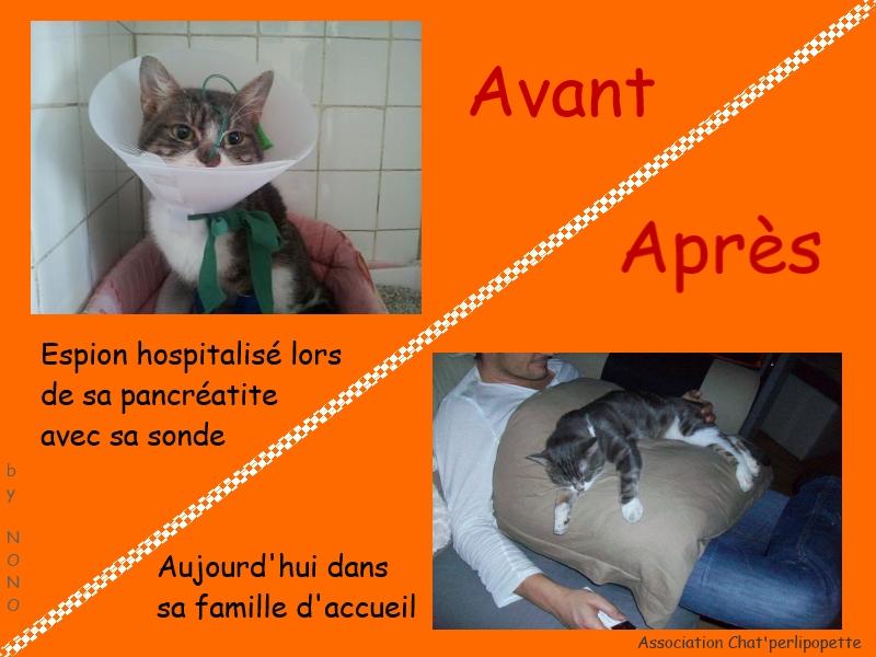 Les avants/après des chats à l'adoption Espion-3bb73d5