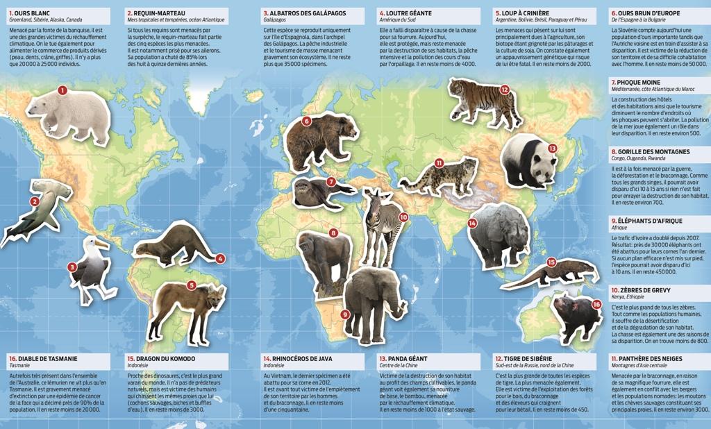 22 Projet Animaux En Voie De Disparition Ideas Animal Habitats Teaching French Learn French