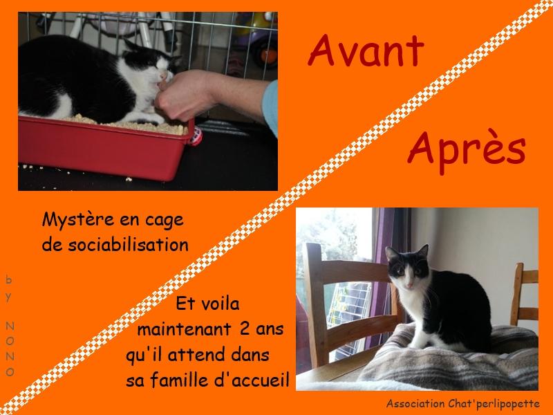Les avants/après des chats adoptés ou en FA définitive Mystere-3bd03be