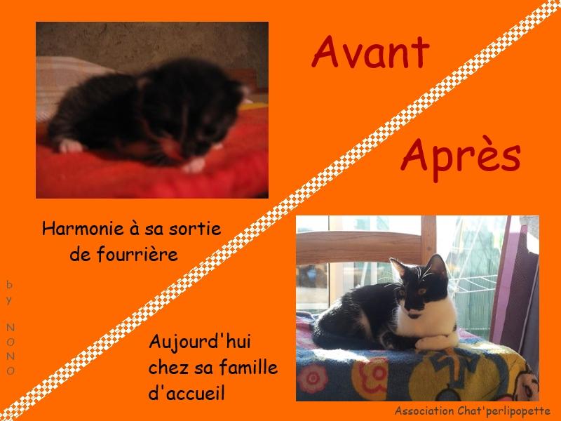 Les avants/après des chats à l'adoption Harmonie-3bb818a