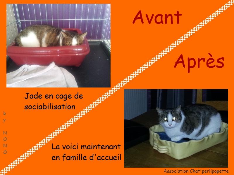 Les avants/après des chats à l'adoption Jade-3bd03e2