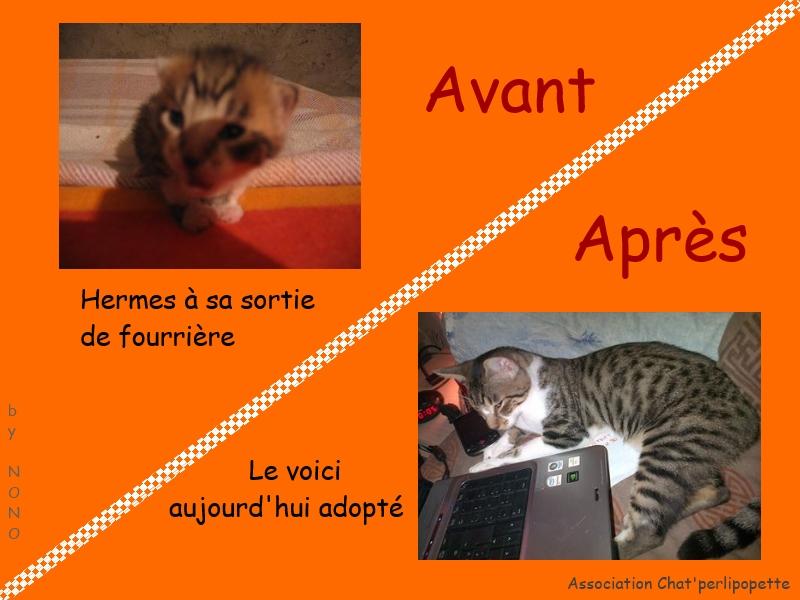 Les avants/après des chats adoptés ou en FA définitive Hermes-3bb8165