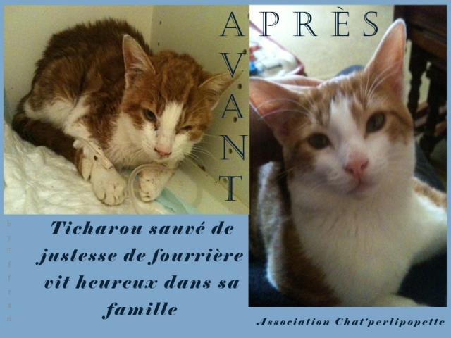 Les avants/après des chats adoptés ou en FA définitive Ticharou-3-3d650ea
