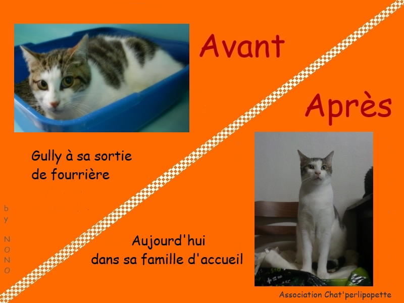 Les avants/après des chats à l'adoption Gully-3cb27ba