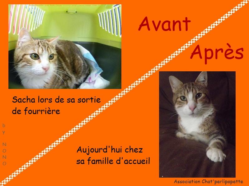 Les avants/après des chats à l'adoption Sacha-3bce5e7