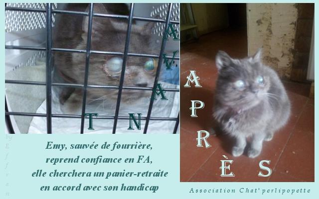 Les avants/après des chats adoptés ou en FA définitive Emyok-3d7563a