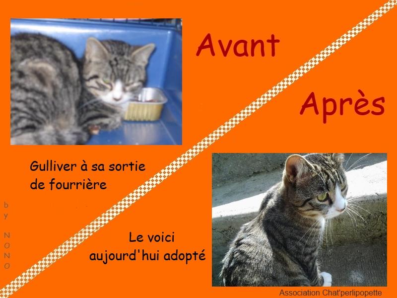 Les avants/après des chats adoptés ou en FA définitive Gulliver-3cb23d5