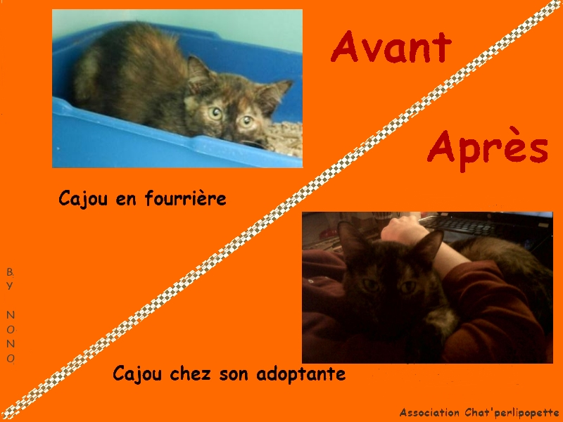 Les avants/après des chats adoptés ou en FA définitive Cajou-3cb5fe1