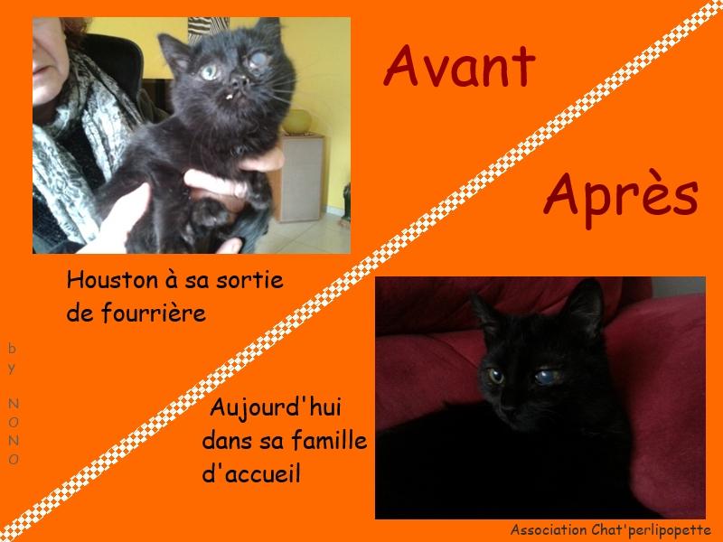 Les avants/après des chats à l'adoption Houston-3bce6b4