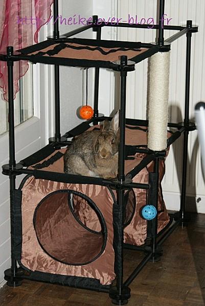 la maison des chats de valenciennes le forum les. Black Bedroom Furniture Sets. Home Design Ideas