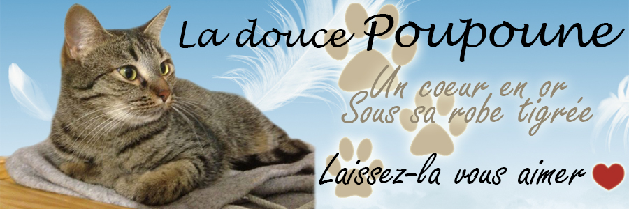 chat'perlipopette Forum Index