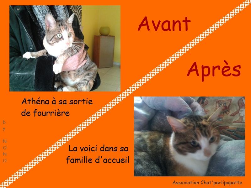 Les avants/après des chats adoptés ou en FA définitive Ath-na-3bced30