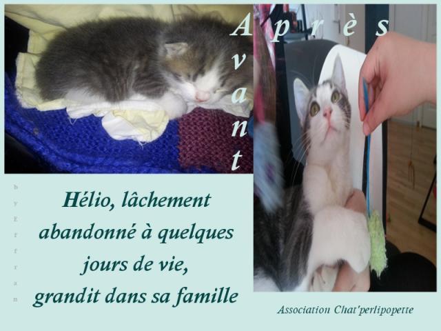 Les avants/après des chats adoptés ou en FA définitive H-lio-3d6529e