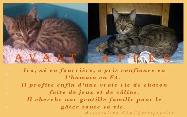 Les avants/après des chats à l'adoption Iro-4157ba4