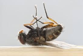 Compil .... les mouches par M64  23 novembre 2013 Images-1--425bcf0