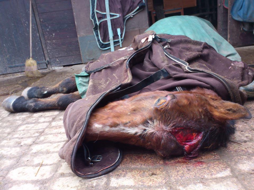 Touraine insolite mutilations de chevaux france - Comment dessiner un poney ...