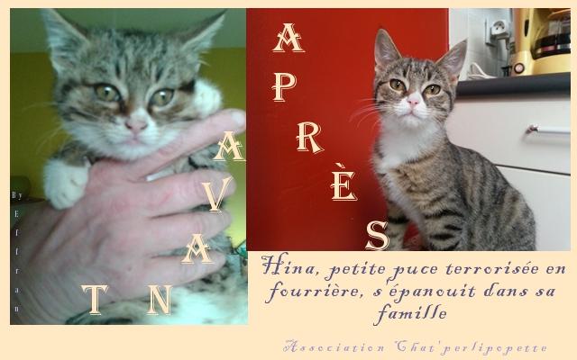 Les avants/après des chats adoptés ou en FA définitive Hina-ap-3e06996