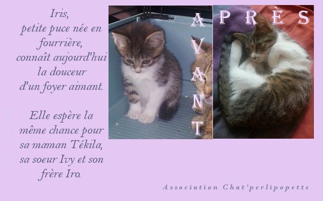 Les avants/après des chats adoptés ou en FA définitive Iris-4136bd3
