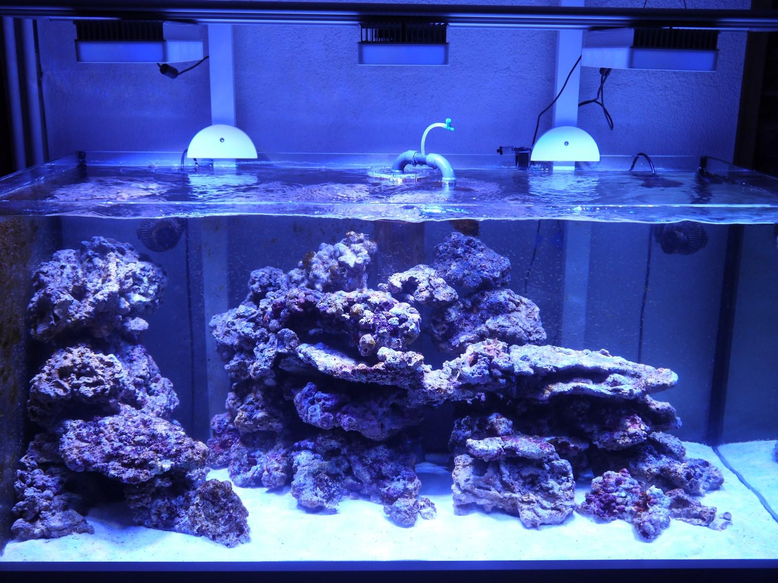 p1030051-3fae801 Frais De Aquarium Recifal Complet Concept