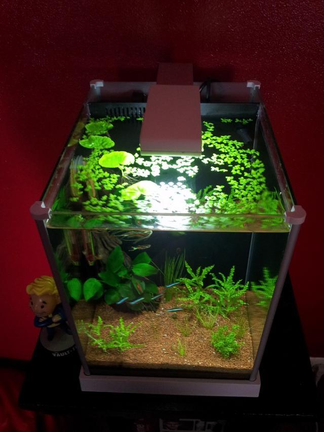 Inscrit le 13 mai 2013 for Filtre aquarium 20l