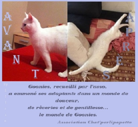 Les avants/après des chats adoptés ou en FA définitive Goonies-4094235