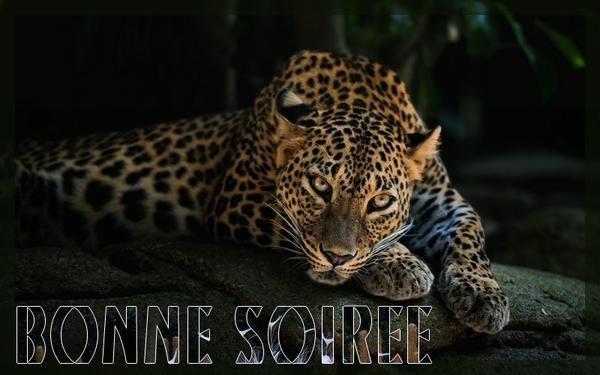 BONNE SOIREE DE MERCREDI 7ee0251c-40132eb