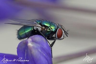Compil .... les mouches par M64  23 novembre 2013 Img_5309a-424ce1f