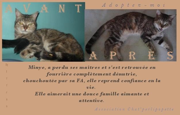 Les avants/après des chats à l'adoption Minye-409562c