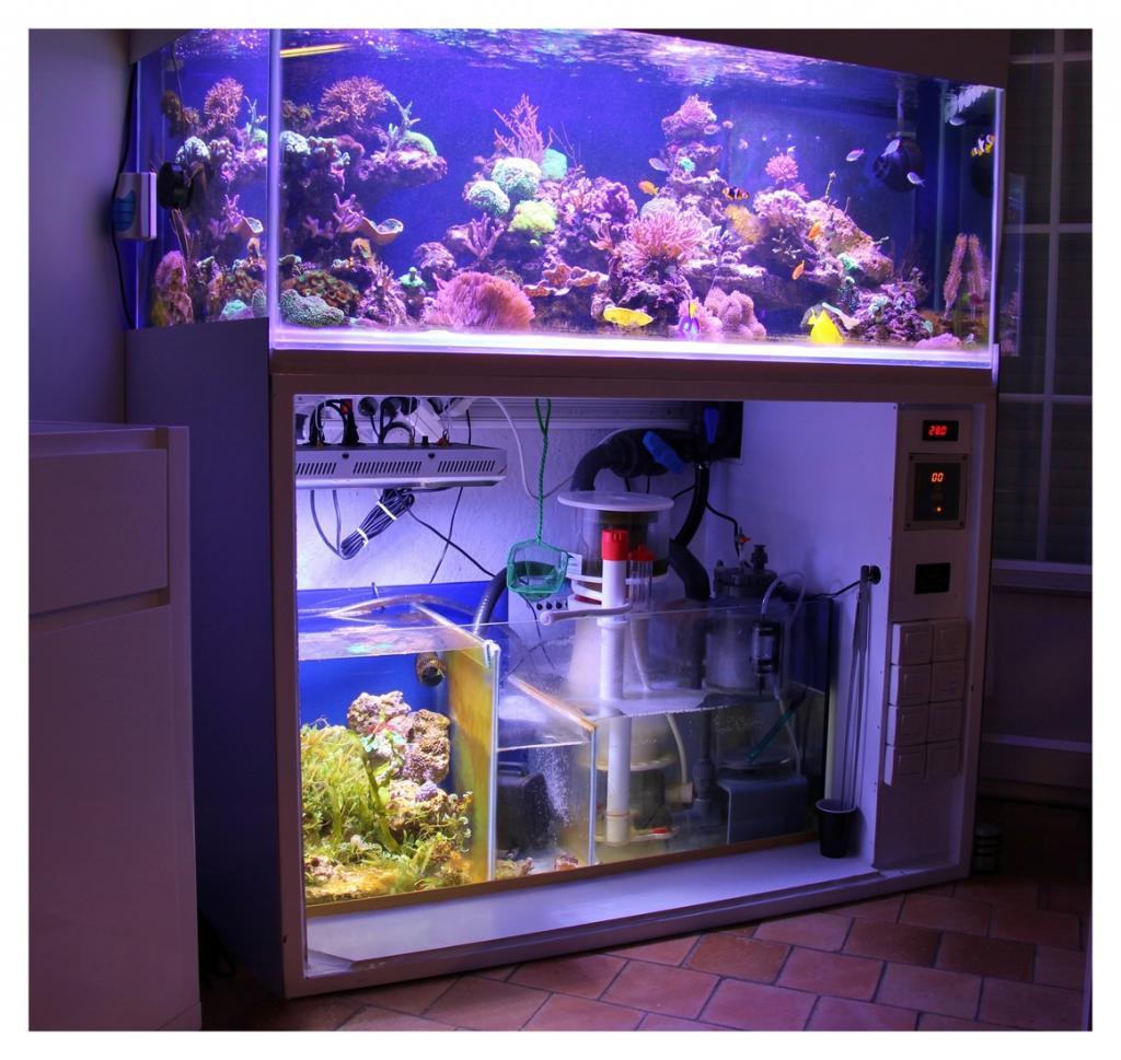 aquario philrecifal l hexagone 500l de tom