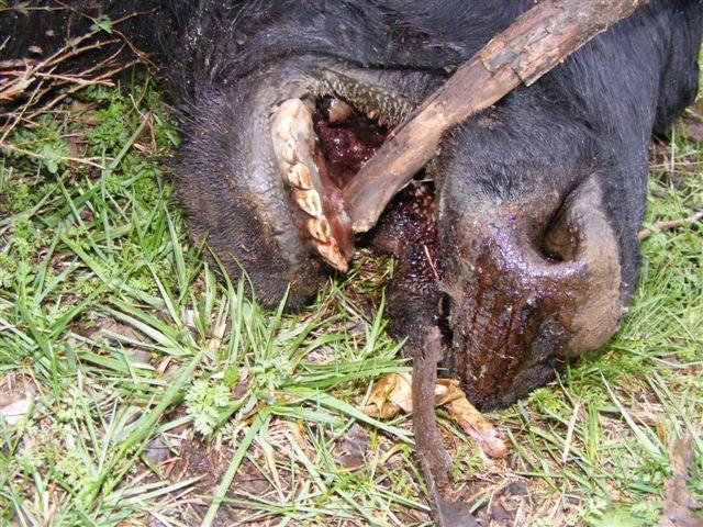 Mutilations à répétition dans le Missouri. 2013-04-10-rich-h...uri--01b-404f2b8