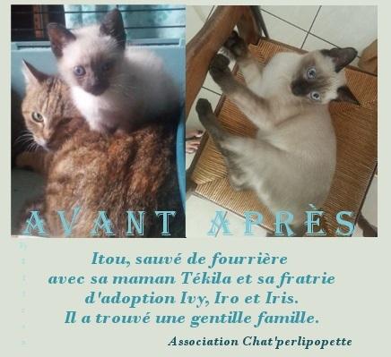 Les avants/après des chats adoptés ou en FA définitive Itou-421455b