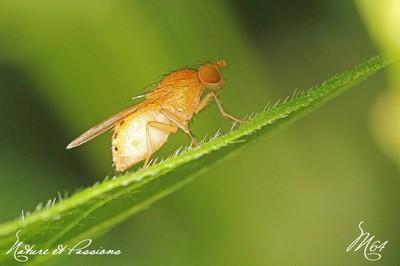Compil .... les mouches par M64  23 novembre 2013 Img_4621-424cdfd