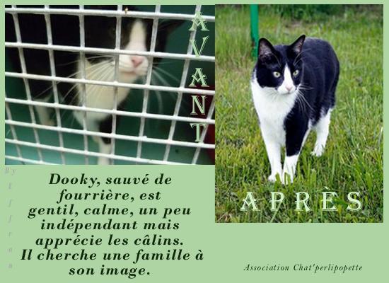 Les avants/après des chats à l'adoption Dooky-3f2ba63