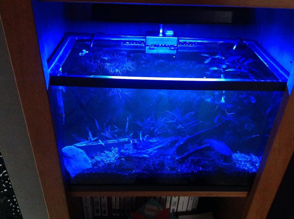 nombre d 39 aquarium s 2. Black Bedroom Furniture Sets. Home Design Ideas