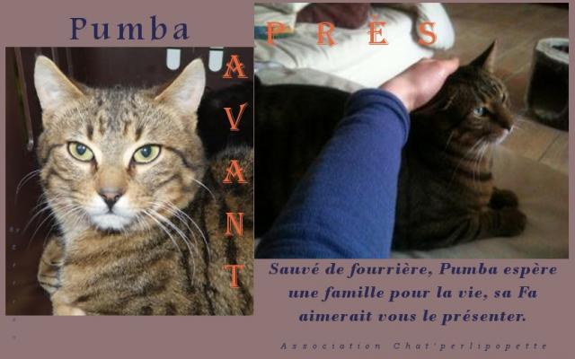 Les avants/après des chats à l'adoption Pumba-ap-3e06650