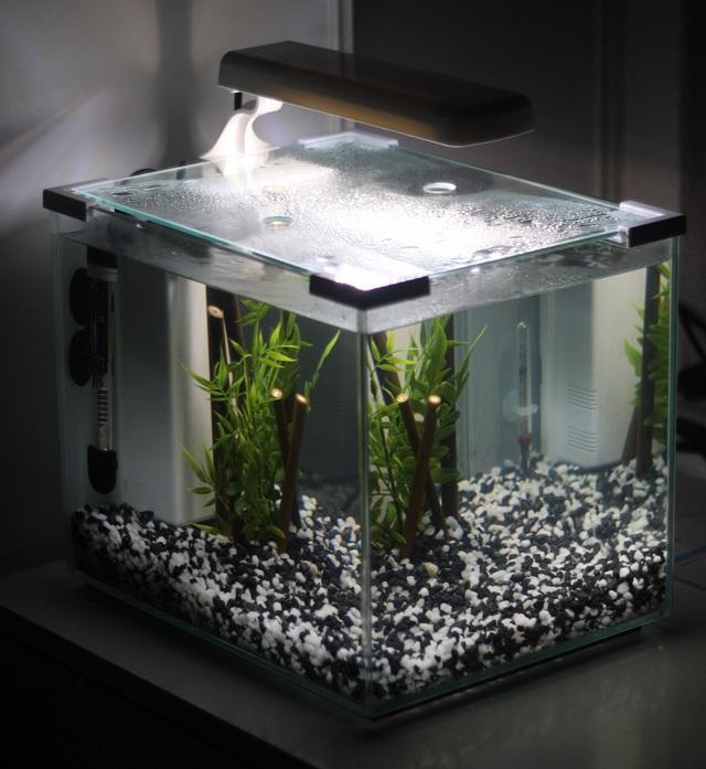 aquarium 20l jardiland voila with aquarium 20l jardiland. Black Bedroom Furniture Sets. Home Design Ideas