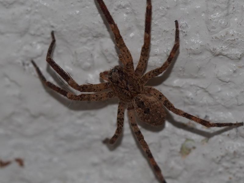 Ce que j 39 aime photographies arachnides insectes botanique - Une araignee dans la salle de bain ...