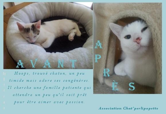 Les avants/après des chats à l'adoption Hoops-43247a4